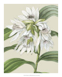 Orchid Blooms III Giclee Print