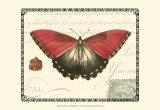 Butterfly Prose I Print