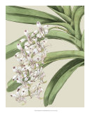 Orchid Blooms I Giclee Print