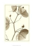 Cropped Sepia Botanical IV Premium Giclee Print