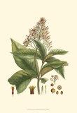 Crimson Botanical III Prints by  Hierseman