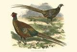 Bohemian Pheasant Prints