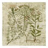 Garden Verses I Giclee Print