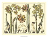 Narcissus in Bloom II Posters by Langlois 