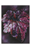 Heuchera After Rain Poster by Sue Warner
