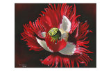 Red Poppy After Rain Print by Sue Warner