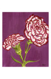 Purple and White Carnations Print by Elise Ferguson