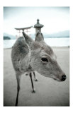 The Deer of Itsukushima Print by Takashi Kirita