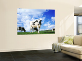 Cows in Field, Lake District, England, United Kingdom Wall Mural