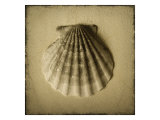 Seashell Study I Giclee Print by Heather Jacks