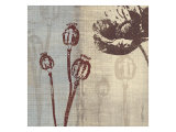 Chocolate Poppy Giclee Print by Tandi Venter