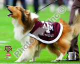 Reveille VII Texas A&M Aggies Mascot 2005 Photo