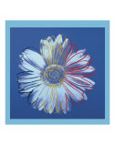 Daisy, c.1982  (blue on blue) Poster af Andy Warhol