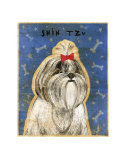 Shih Tzu Prints by John Golden