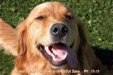Joyful Doggie Posters
