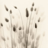 Italian Tall Grass No. 1 Posters by Alan Blaustein