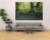 Bluebells in a Forest, Thorp Perrow Arboretum, North Yorkshire, England Wall Mural
