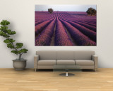 Lavender Field, Fragrant Flowers, Valensole, Provence, France Wall Mural