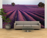 Lavender Field, Fragrant Flowers, Valensole, Provence, France Wall Mural – Large