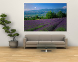 Flowers in Field, Lavender Field, La Drome Provence, France Muurposter