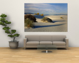 Desert Plants in White Sands National Monument, New Mexico, USA Wall Mural