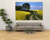 Canola, Farm, Yellow Flowers, Germany Wall Mural