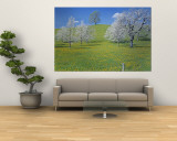 View of Blossoms on Cherry Trees, Zug, Switzerland Wall Mural