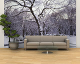 Bare Trees During Winter in Central Park, Manhattan, New York City, New York, USA Wall Mural – Large