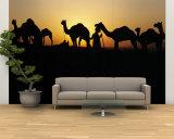 Silhouette of Camels in a Desert, Pushkar Camel Fair, Pushkar, Rajasthan, India Fototapete – groß
