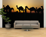 Silhouette of Camels in a Desert, Pushkar Camel Fair, Pushkar, Rajasthan, India Wall Mural – Large
