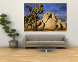 Joshua Tree National Park, California, USA Wall Mural