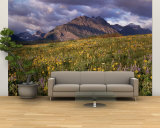 Flowers in a Field, Glacier National Park, Montana, USA Wall Mural – Large