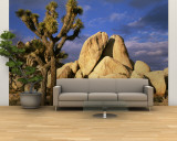 Joshua Tree National Park, California, USA Wall Mural  Large