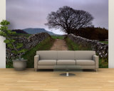 Stone Walls Along a Path, Yorkshire Dales, England, United Kingdom Wall Mural – Large