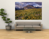 Flowers in a Field, Glacier National Park, Montana, USA Wall Mural