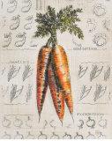 Vintage Linen Carrot Prints by Lauren Hamilton