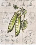 Vintage Linen Peas Poster by Lauren Hamilton