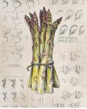 Vintage Linen Asparagus Prints by Lauren Hamilton