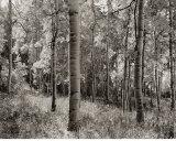 Birch Clearing Posters by Brett Aniballi