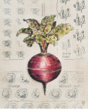 Vintage Linen Beet Print by Lauren Hamilton