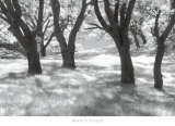 Blue Oaks Prints by Marty Knapp