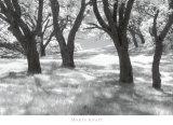 Blue Oaks Prints by Marty Knapp