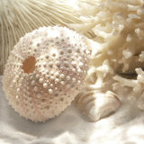 Koral og strandskal I, Coral Shell I Plakater af Donna Geissler