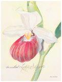 Raspberry Orchid Art by Elissa Della-piana