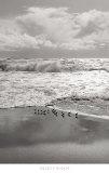 Shorebirds, Point Reyes Poster von Marty Knapp