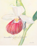 Raspberry Orchid Art by Elissa Della-piana