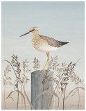 Bird's Eye Sea View Print by Jurgen Gottschlag