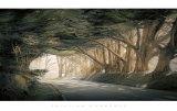 William Vanscoy - Inside a Dream Obrazy