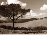 Tuscan Tree Prints by Ilona Wellman