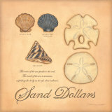 Sand Dollars Prints by Stephanie Marrott